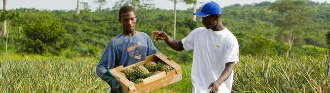 smallholder farmers in Ghana - Africa