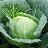Vegetable BrassicaCrop  Nutrition