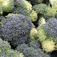 Broccoli Crop Nutrition Programme