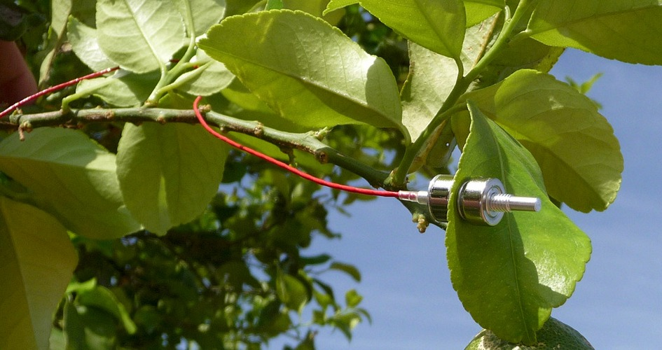 ZIM Technology probe in citrus tree