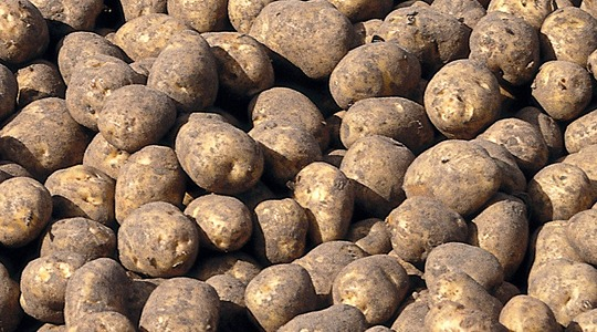 How to increase potato tuber size