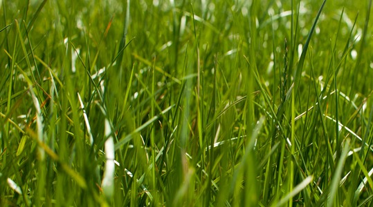 How to improve pasture quality
