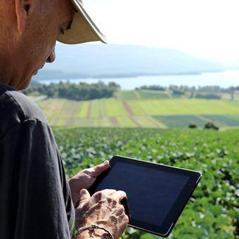 Yara erweitert Angebot zum digitalen Pflanzenbau - Internet-Plattform zur Pflanzenernährung erworben