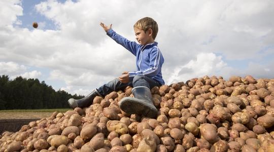 Het verhogen van de aardappelopbrengst