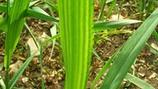 Macronutrientes para calidad del grano