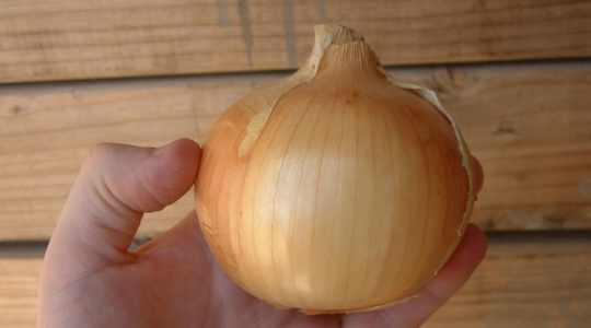 How to improve onion firmness