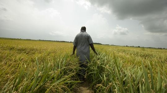 Yara farmer walking through field