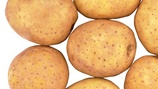 Increasing Potato Tuber Size