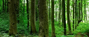 Trees in a forest using Yara product