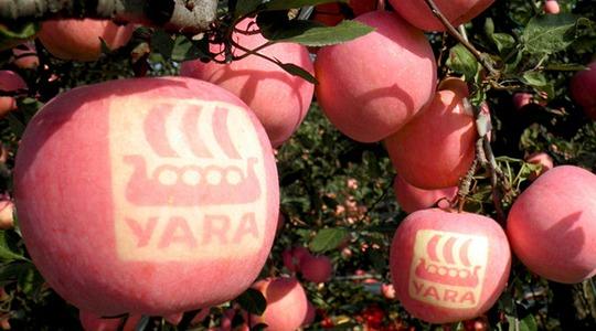 钾在苹果生产上的作用