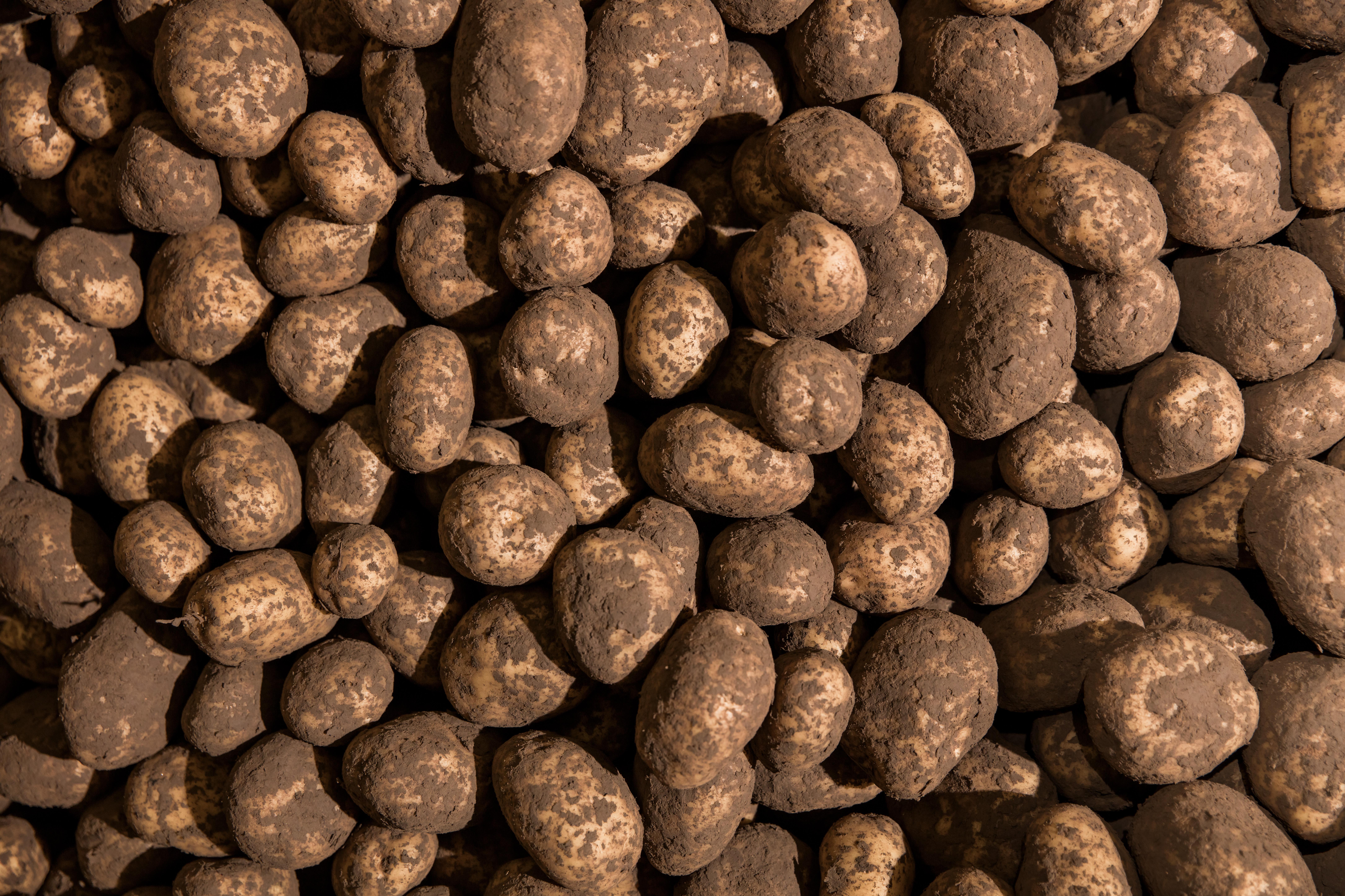 Kartupeļu mēslošanas programma