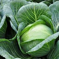 Cabbage Crop Nutrition Programme