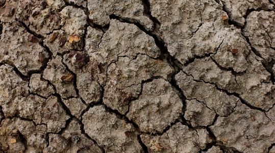 Tørr jord