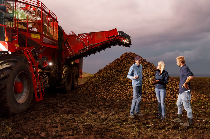 How to increase sugar beet yield