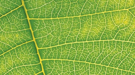 YaraVita bladgjødslingskalender