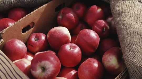manzana, abono, abonos, fertilizantes