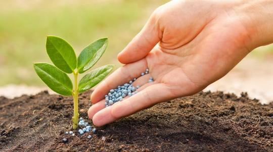 Aplicar fertilizante