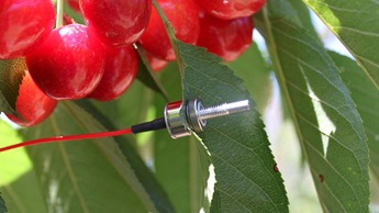 Water Sensor in cherries