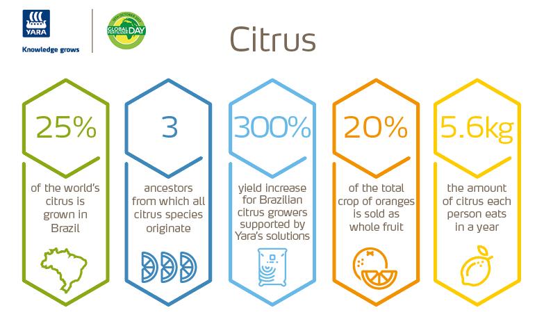 Citrus infographic