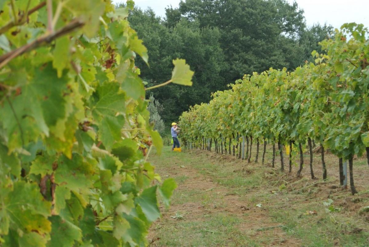 Foto Tra borghi incantati e vigne secolari