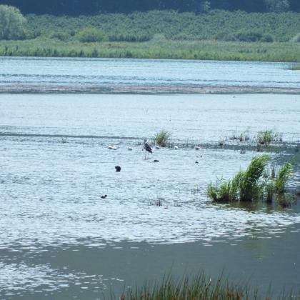 Foto Lago di Vico