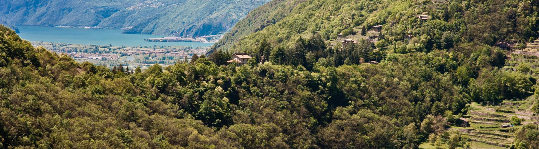 Copertina Tra vigne e ulivi in bassa Valle Camonica