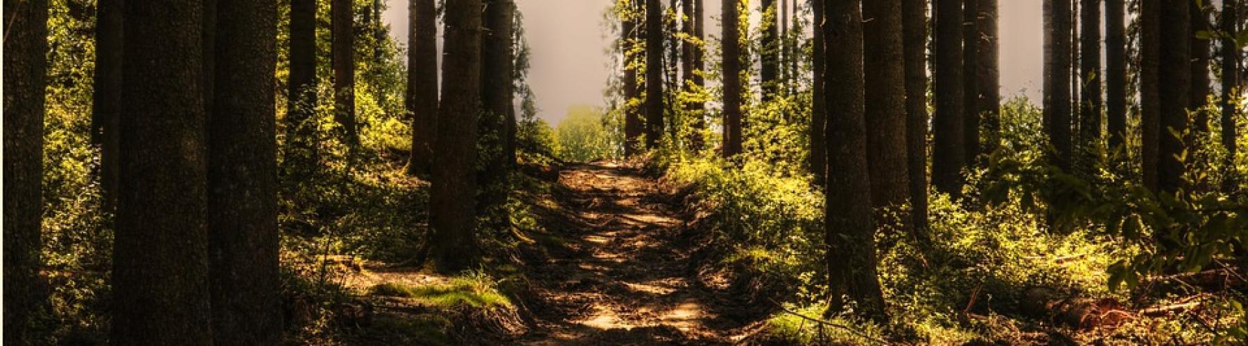 Copertina Foresta Regionale di Legnoli