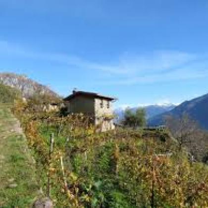 Foto Tra vigne e ulivi in bassa Valle Camonica