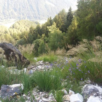 Foto Cava di Marmo del Borom - Vezza d'Oglio