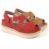 Zapato para plantillas e basset 4