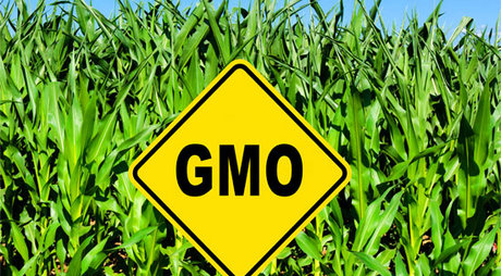 About-gmos-food-farm-field