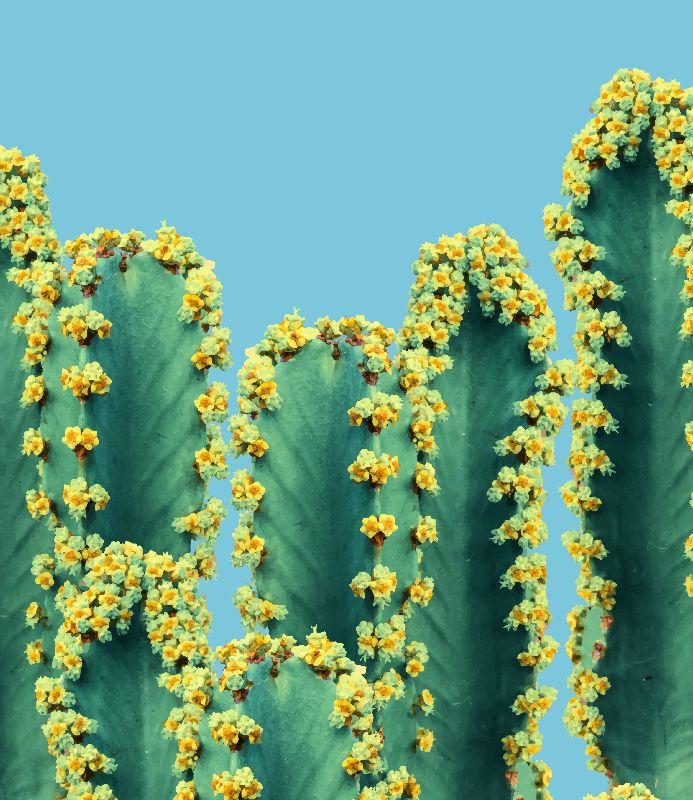 Adorned Cactusv2