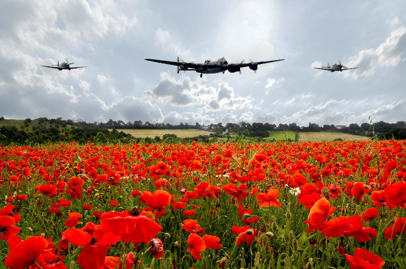 Poppy Fly Past