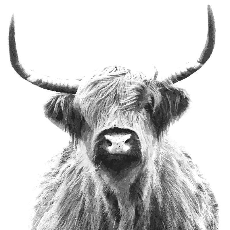 Black White Highland Cow