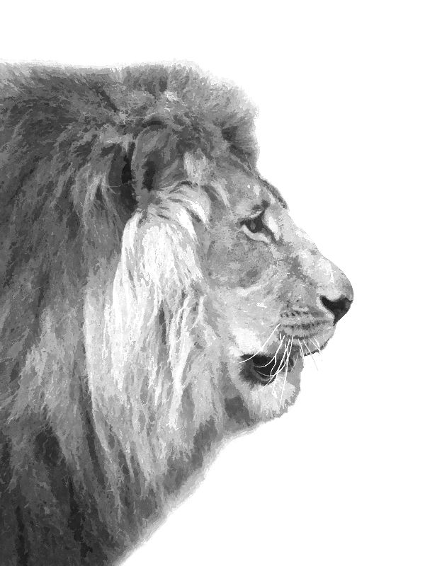 Black White Lion Profile