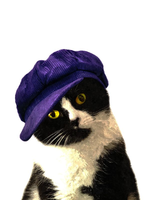 Cat Blue Hat