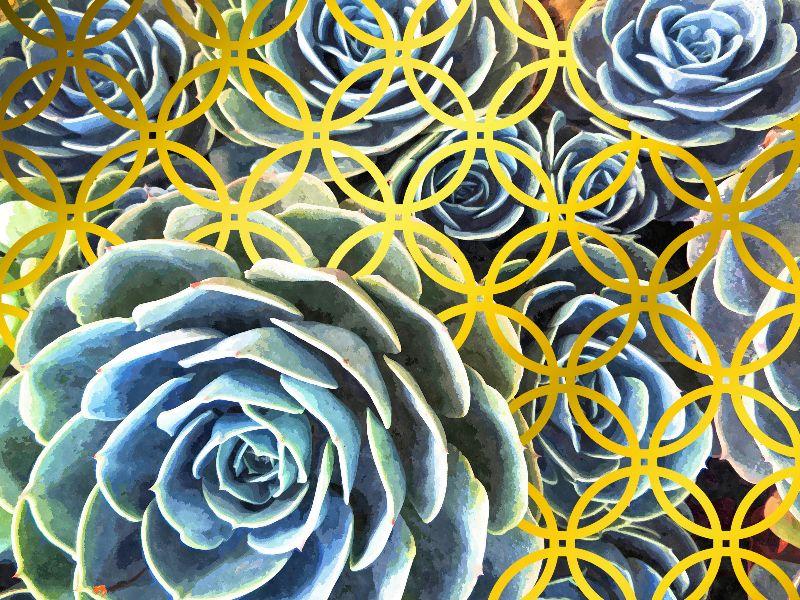 Succulent Geometric