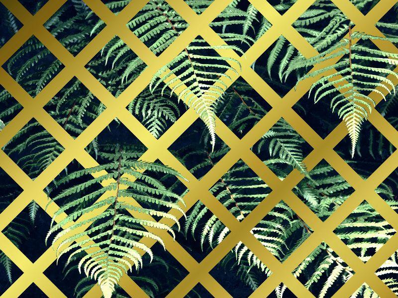 Tropical Fern Geometric