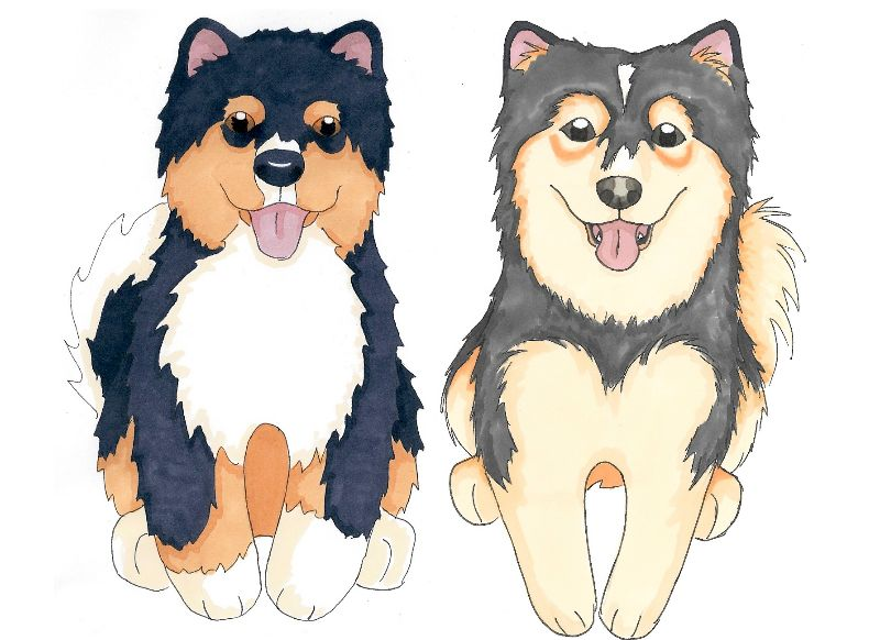Finnish Lapphund Duo