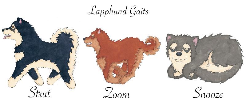 Lapphund Gaits