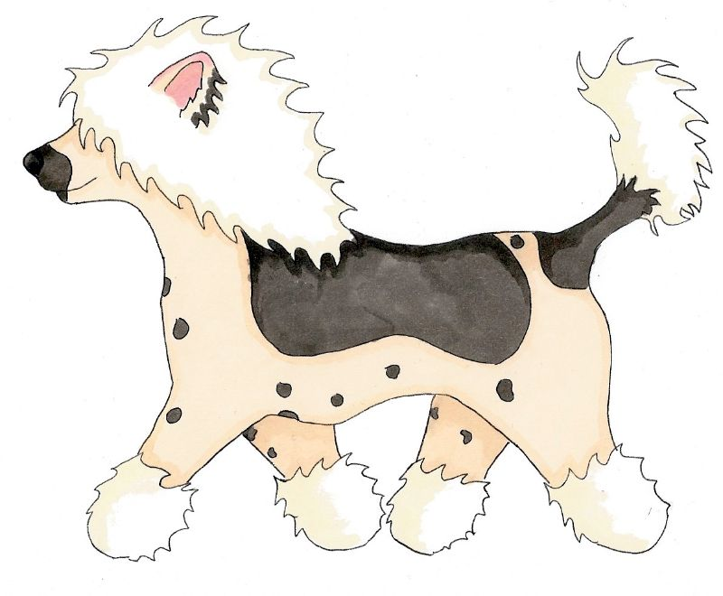 Strutting Chinese Crested