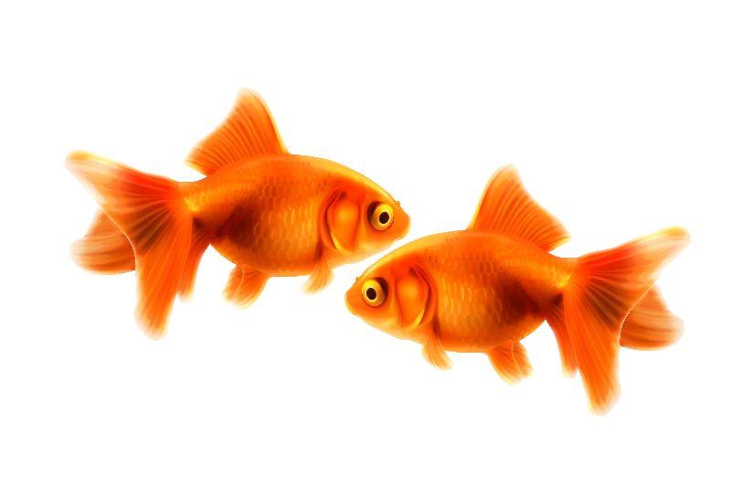 Twin Goldfish