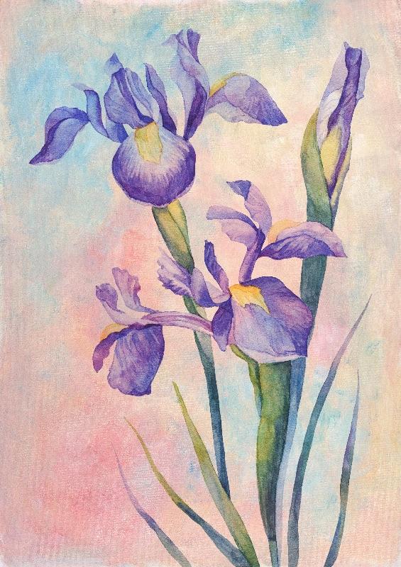 Angel Iris  Joyful