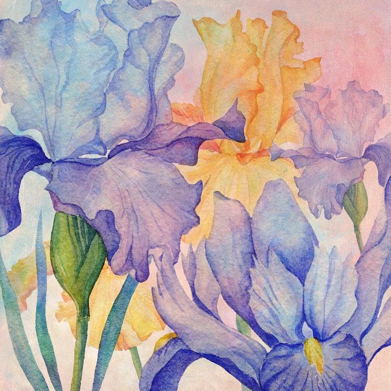 Angel Iris Delight