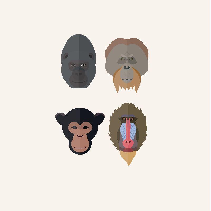 Monkey  Ape portraits
