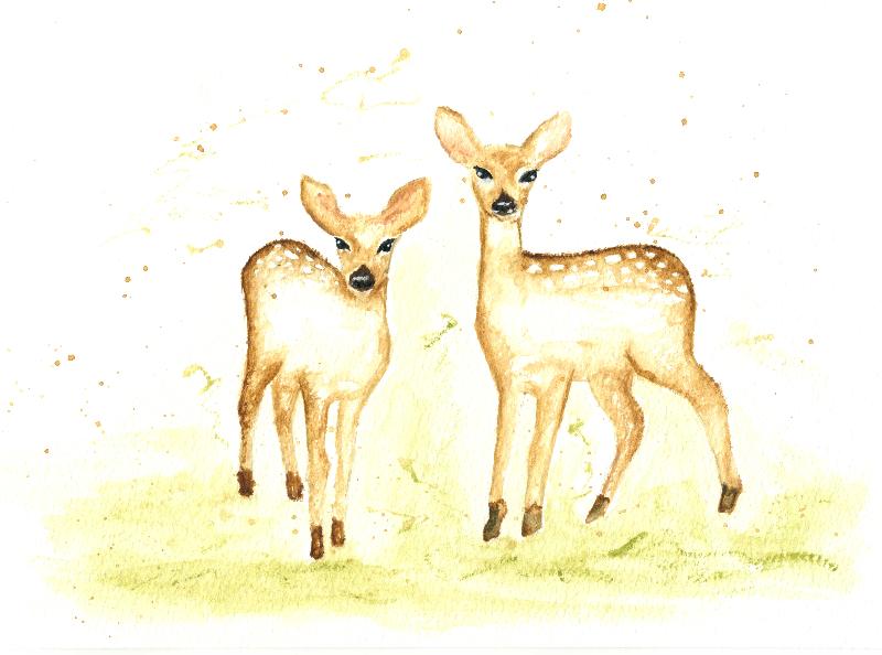 Two watercolour baby deer
