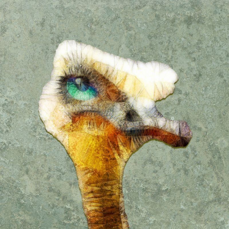 abstract ostrich