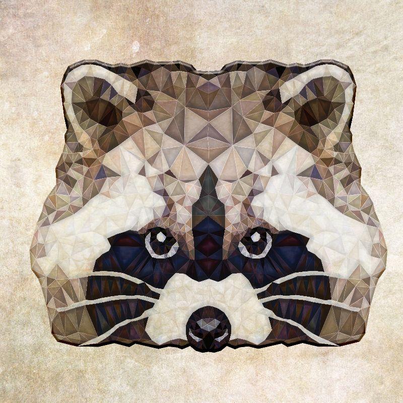 polygon racoon