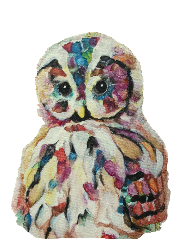 Colourful Owl on white