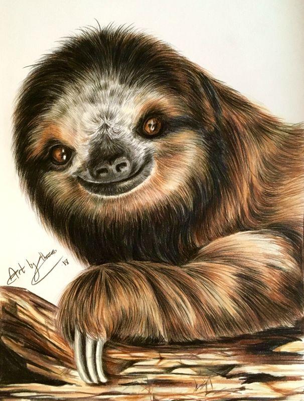 Sloth Smiles